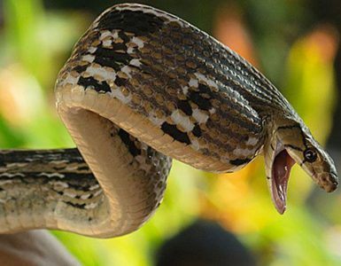 %e8%9b%87%e5%9b%ad-snake-farm