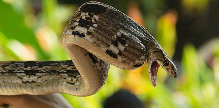 bangkok-snake-farrm-2